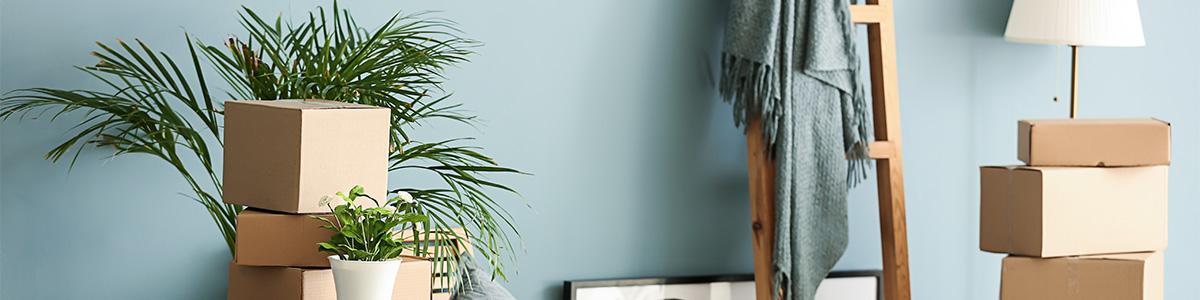 Pflanzen stehen auf Umzugskartons vor Wand als Symbol für Vorschrfiten für Tiere und Pflanzen